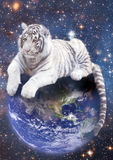 White tiger siting on Earth. On the background of stars Stock Photography
