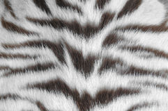 White tiger skin Royalty Free Stock Photo