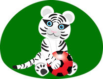 White tiger with a soccer ball. For your design Royalty Free Stock Images