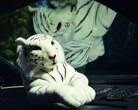 White Tiger Stuffed Animal Royalty Free Stock Photography