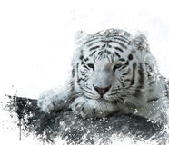 White Tiger watercolor Stock Photo