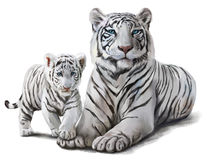 White tigers. Two white tigers watercolor painting Royalty Free Stock Photo