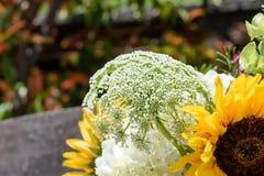 White tiny flowers Stock Photos