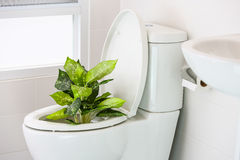 White toilet in modern home, white toilet bowl in cleaning room, flushing liquid in toilet, private toilet in modern room Stock Photo