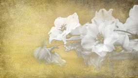White toned flowers on paper Stock Image