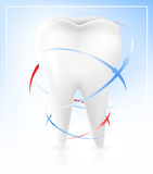 White tooth. Vector illustration of white tooth Royalty Free Stock Photography