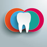 White Tooth Four Colored Circles Design Stock Images