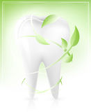 White tooth with green leaves-arrows. Vector illustration of white tooth with light green leaves-arrows. Dental concept Royalty Free Stock Image