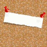 White torn piece of paper attached pushpin on a cork board. Blank page attached to a cork notice board Stock Photo