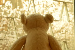 White toy bear. On the window waiting for a spring n Stock Photo
