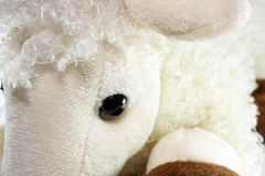 White toy lamb. A series of photos with a white toy lamb on a white background Stock Image