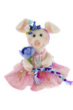 White toy pig in a pink skirt. A White toy pig in a pink skirt Royalty Free Stock Images