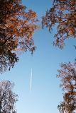 White trail of the Aircraft in the blue sky over the branches wi stock photos