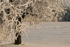 White tree. Snow cover the village, frozen trees and bushes Royalty Free Stock Photos