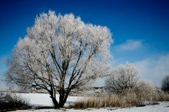 White tree. Royalty Free Stock Images