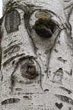 White tree bark with gray lines in the form of drawings royalty free stock images