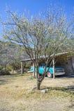 White tree Stock Photos