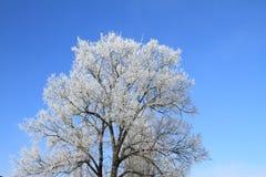 White tree Stock Images