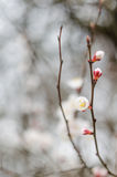 White tree flowers in spring. Spring flowers Stock Photo