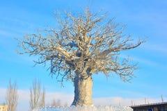 White tree in ice town in Omsk, Siberia Stock Photo