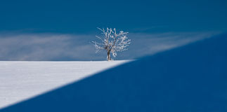 White tree in the middle of winter. In Czech republic Royalty Free Stock Image