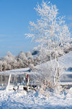 White tree and river stock photography