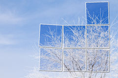 White tree in snow over blue sky. With framed parts of picture. Cold winter Stock Image