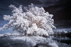 White trees Royalty Free Stock Photo