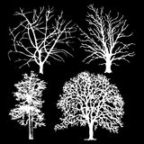 White trees on a black background Stock Images