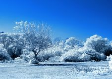 White trees and blue sky Royalty Free Stock Photography
