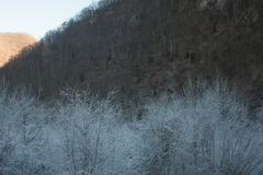 White trees Royalty Free Stock Images