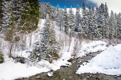 White trees covered by fresh snow in Alps, postcard winter lands Royalty Free Stock Photography
