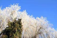 White trees Stock Photo