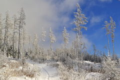 White trees with frost in a snowy country under clouds and blue sky Stock Photos