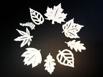 White trees leaves. Paper cutting. Stock Photo