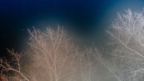 White trees on the night sky. White poplar trees on the background of night sky time lapse video stock video