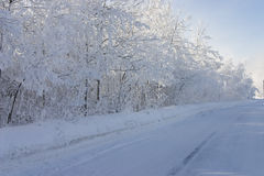 White trees and the road Stock Image