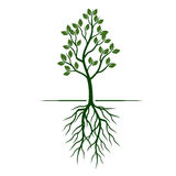 White Trees with roots on green background. Vector Illustration. White Trees with roots on green background Royalty Free Stock Images
