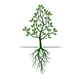 White Trees with roots on green background. Vector Illustration. White Trees with roots on green background Royalty Free Stock Image