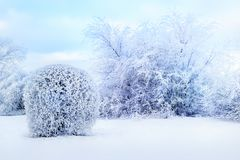 White trees in the snow in the city park. Beautiful winter landscape royalty free stock image