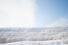White Trees on Snow Fields during Daytime Royalty Free Stock Image