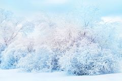 White trees in the snow in the forest. Beautiful winter landscape. Christmas background stock photo