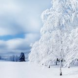 White trees in the snow in the forest. Beautiful winter landscape. Square image stock image