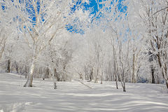 The white trees on the snowfield Royalty Free Stock Photos