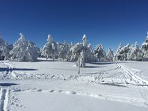 White Trees after snowing. Navafria Ski Resort - Cross-Country Skiing after snowing in a sunny winter day stock photography