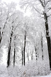 White trees in winter season. Group of white trees and road in winter season Royalty Free Stock Photography