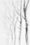 White trees winter watercolor. Winter landscape watercolor background. Winter white landscape with trees in perspective Royalty Free Stock Photos