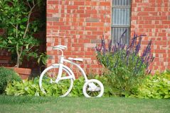 White Tricycle in House Flower Bed. A photograph of a white painted tricycle in a house flower bed stock image