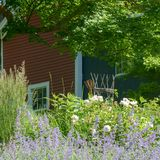 Purple and White flowers hide a beautiful red barn in MA. A white trimmed 6 pane wndow is low on the wall, almost hidden by flowers Stock Photography