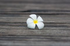 White tropical flower on the grunge old wood background Stock Photography